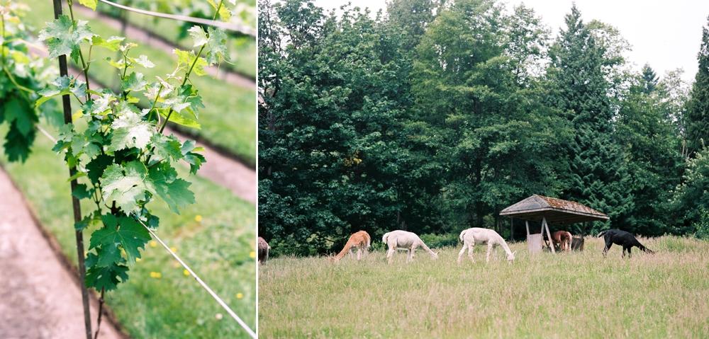 vines_and_alpacas