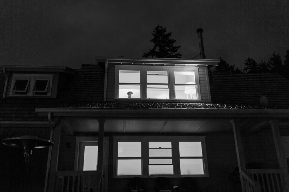 dog_peeking_out_window